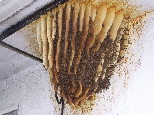 Prop showcase how to make life size bee hive for prop