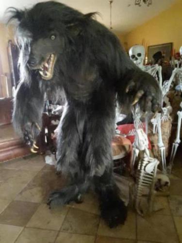 Werewolf Halloween Prop