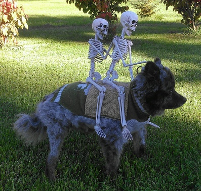 Threw Another Skeleton On Our Dog Maxs Costume Barky
