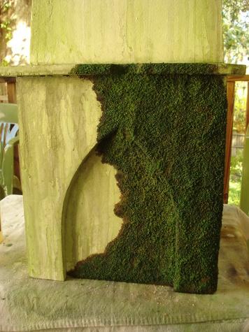 carpet moss. dsc01350.jpg carpet moss