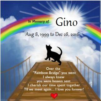 The Pets of Halloween Forum-gino-rainbow-bridge.jpg