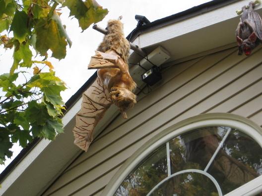 Looking for a winged Skeleton-img_3007.jpg
