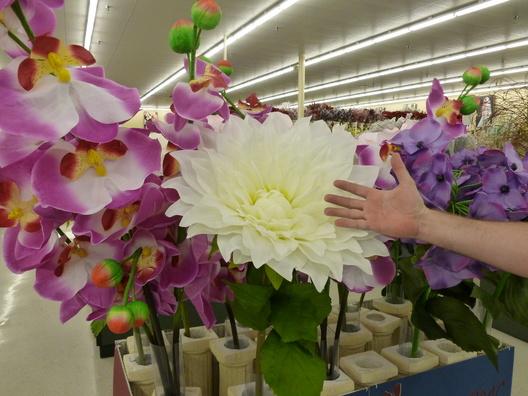 Holy Mackerel Giant Flowers Like Monster Flowers
