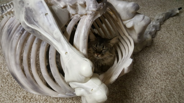 The Pets of Halloween Forum-scout-helps.jpg