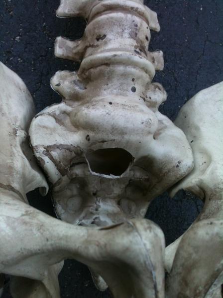 Skeletons Carrying Coffin-skelly-coffin-3.jpg