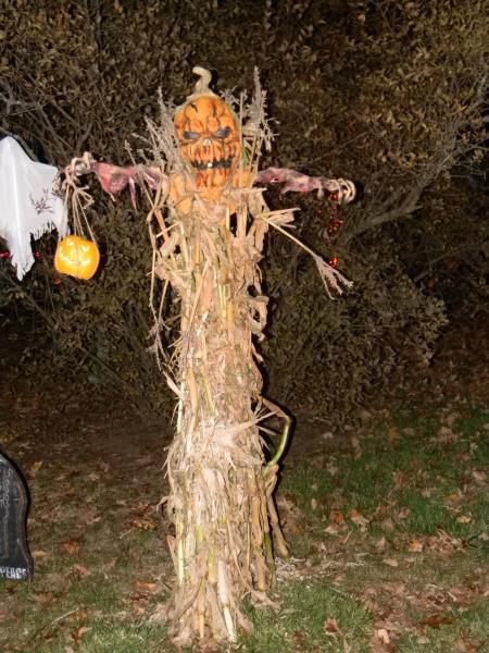 tumblindice albums halloween 2010 picture64971 halloween 2010 044jpg - Halloween Corn Stalks