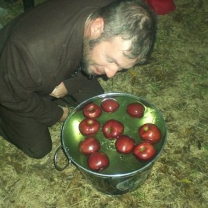 Let the bobbing for apples begin !!! just watch out for the ones with razor blades .............