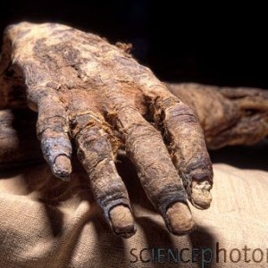 inspiration for coloring and wrappings: actual mummy hand of  Ramases IV