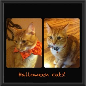 halloween cats...so not impressed!