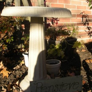 pensieve (bird bath)