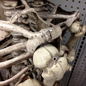 RITE AID, 2013. New skelly shoulder, side closeup