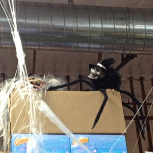 GROCERY OUTLET, 2013. This spider guy is 4.99