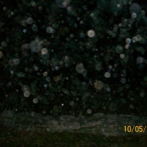 "100 0578 more ""orbs"""