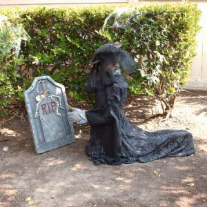 My Yard 050 The Mourning Widow