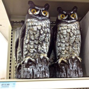 HarborFreight, 2013. Hollow plastic owls, 13.99.