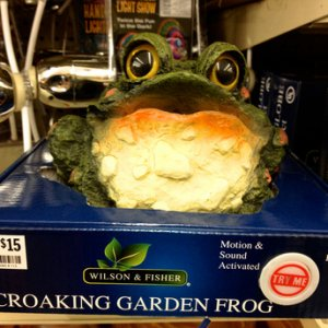 BIG LOTS, 2014. Croaking toad, battery operated. Motion and sound triggered. See Prop section thread on Croaking Toads for more info.