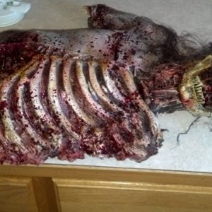 One of two carcass I hope to have by Halloween. The second one is my Ex's...Not sure it will keep till Halloween.  This is a Midnight Studios prop tha