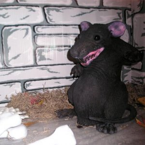 Rat - he stands about 12 inches.  I posed him at a friends laptop last year and the guy jumped 3 feet when he walked into his office.