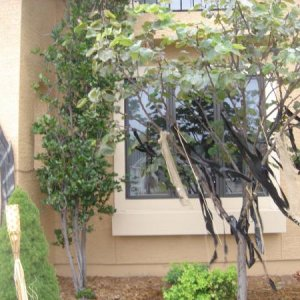 Here's a great way to add instant spook to your yard. Tear up black garbage bags, burlap and grab some raffia and start hanging it on everything: tree
