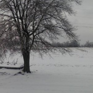 From the wintery landscapes of my Old Kentucky home