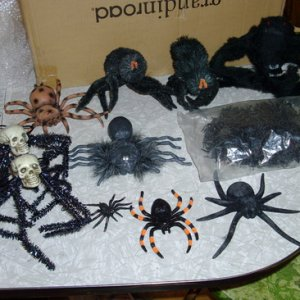 Lots of cool new spiders for my spider room