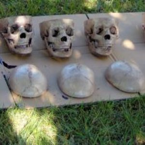 8 Bucky Skulls All In A Row
