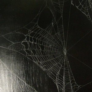 One of my first pictures using three different webs.  This is a rather large picture
