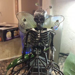 Skellyfly on top of cage