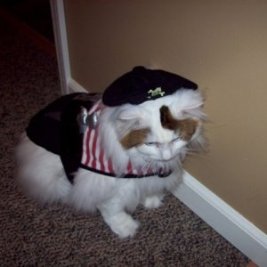 ARGH! It's George the Pirate Kitty!