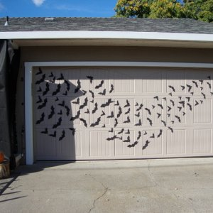 Bat swarm! Cut out of black foam sheets and glued tiny magnet on back to attach to garage door.