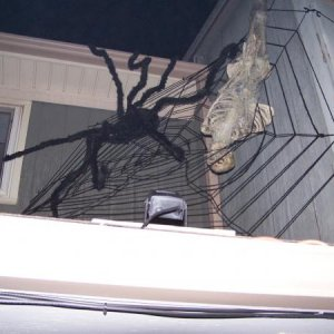 "Another closer view of the spider, web and ""victim"""