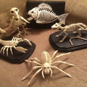 Boney critters collection