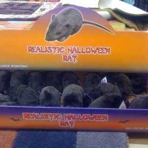 BIG LOTS, 2008. Bought a bunch of these realistic rats when they went on clearance. Great look.