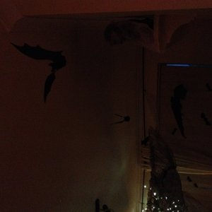 There were a lot of bats all across the ceiling.