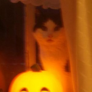 Sadly no longer with us my cat, Miss Trix loved getting in the Halloween spirit!