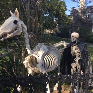 The skeletal rider and his horse have taken their spot in the garden...