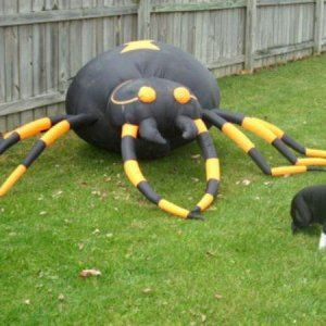 Giant spider, Maddie does not like it