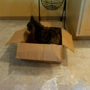 Our cat, making sure I didn't forget anything in the box.