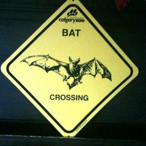 "Bat Crossing sign from the Zoo. Wish they had gone with ""X-ING"" But I guess vampires hate crosses."
