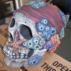 finished skull 002