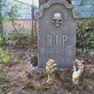 Howie (the cat behind the tombstone) LOVES Halloween!!