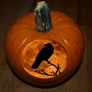 my pumpkin gets photo shopped