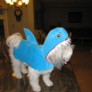 Missy`s first Halloween costume - 2010 Aka the little landshark