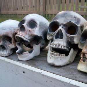Skulls basking in the sun while their glue dries.