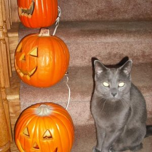 Stair Pumpkins & Kitty