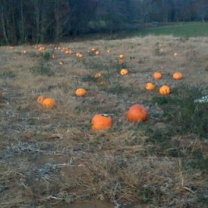 The only bad thing about being in a vast pumpkin patch...we couldn't get them all!!! lol :)