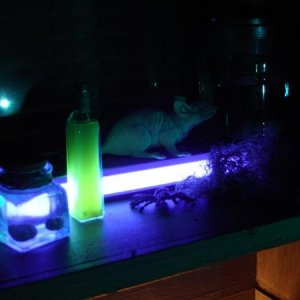 Top shelf of witch pantry with black light.