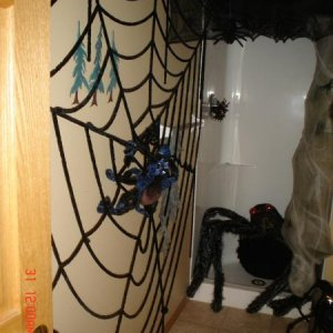 spider bathroom