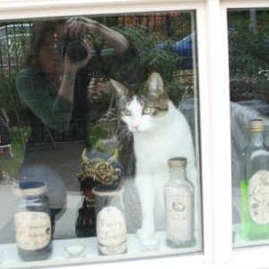 Cat and our downstairs Halloween room with creepy dog in the back and 'ingredient' bottles in the front, sad that the reflection ruins it..