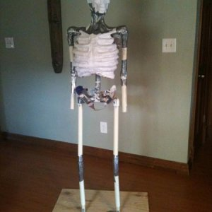 Starting work on Zombie. PVC frame, garden hose ribs, paper mache cast of Bucky skull.